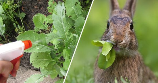Learn How To Keep Rabbits Out Of The Garden